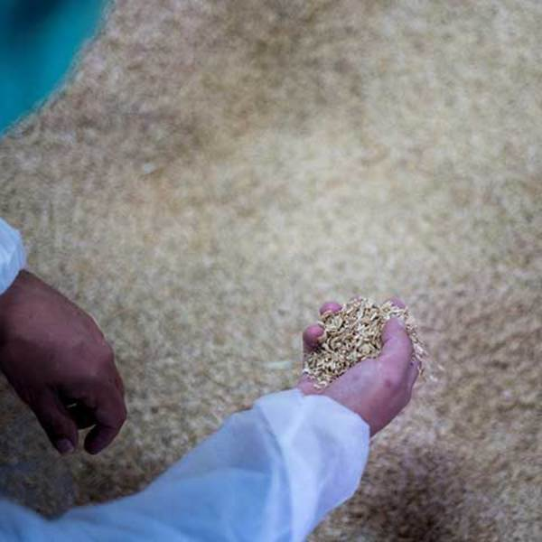 Rice husks to reduce plastic materials: the SEAT project